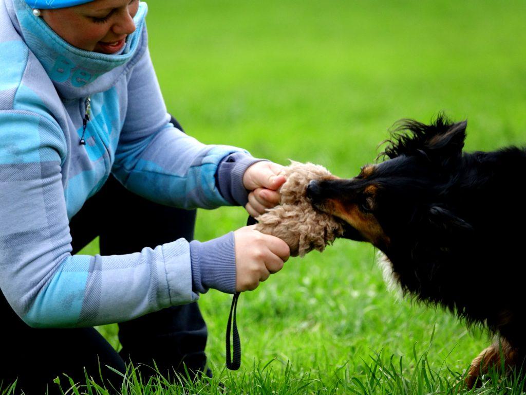 harmonisches Mensch-Hund Spiel
