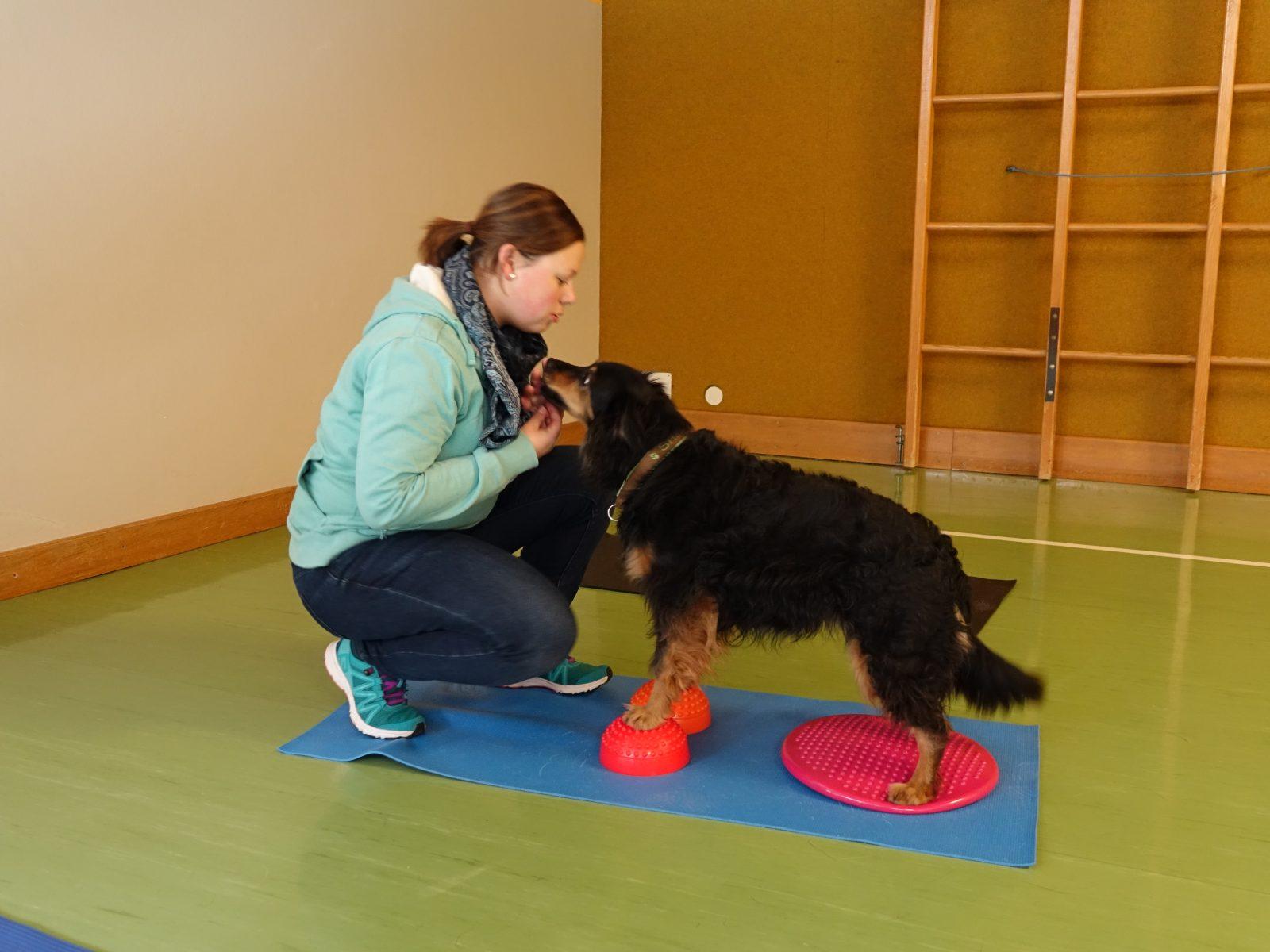 Balancetraining mit Hund