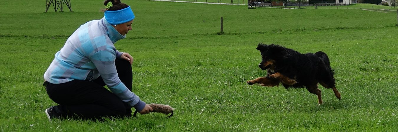 Kreativpfoten Hundetraining