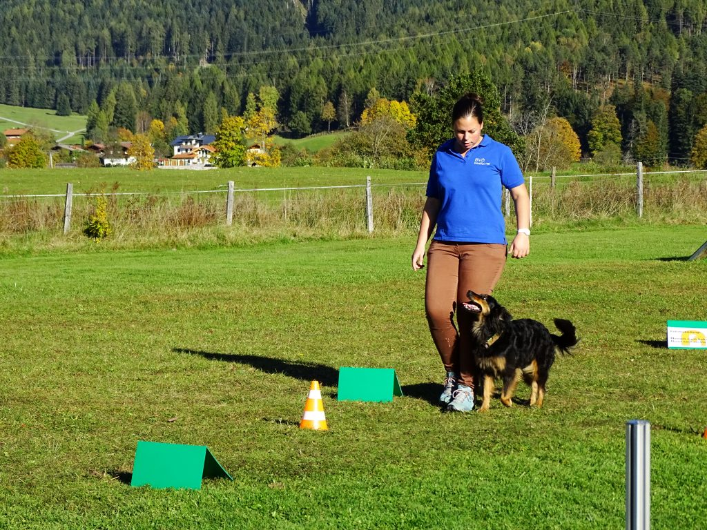 Rally Obedience Traininng