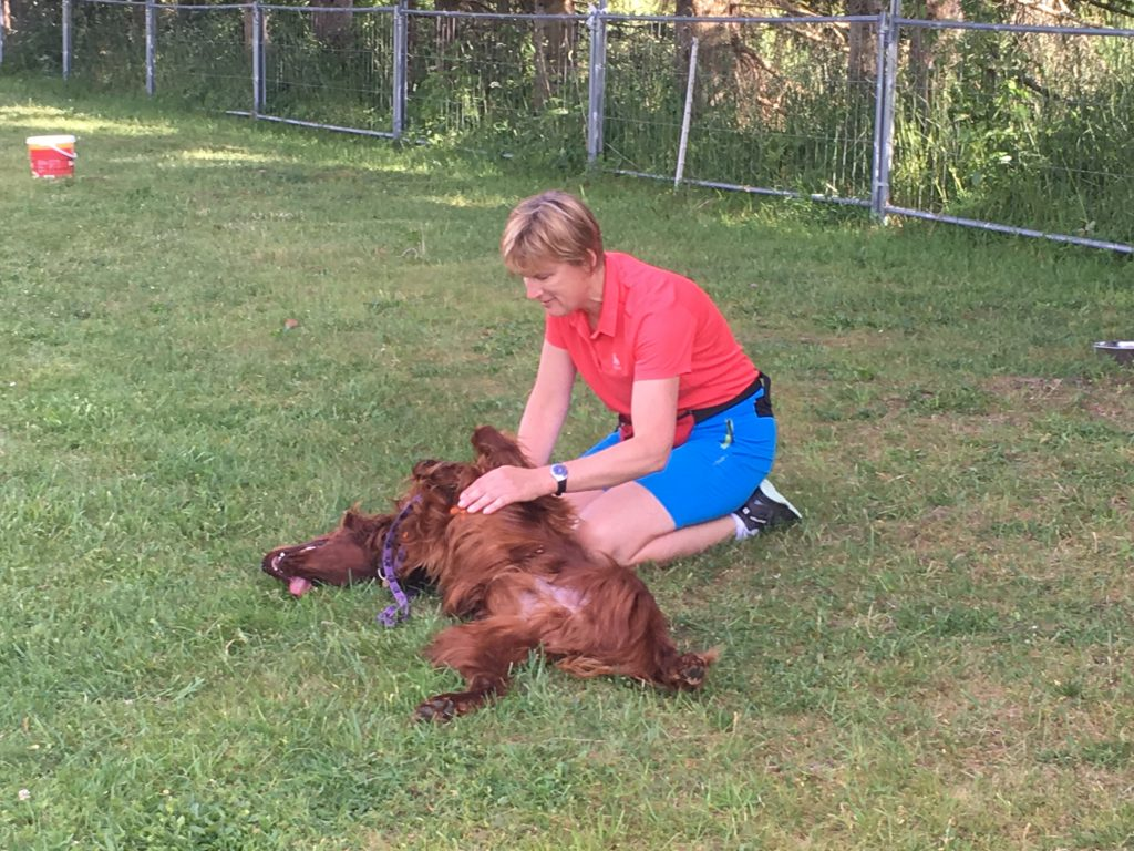 Ruhe finden unter Ablenkung durch andere Hunde