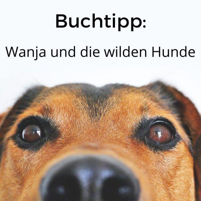 Buchtipp: Wanja und die wilden Hunde