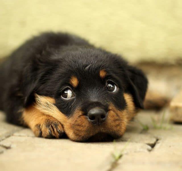 Entspannung im Hund